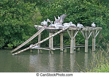 Pelicans - A group of pelicans sitting on a platform