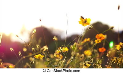 Yellow Spring meadow field river - Video of Spring meadow...