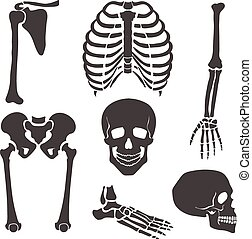Human skeleton. Vector black illustration set