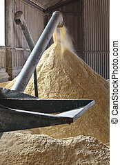 Corn Mill and auger - Milling corn for cattle feed inside a...