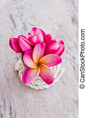 (With clipping path) Isolated beautiful sweet pink flower plumeria