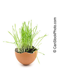 grass in egg shell - green grass growing in brown egg shell