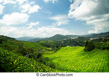 cameron highlands with blue sky in Malaysia.