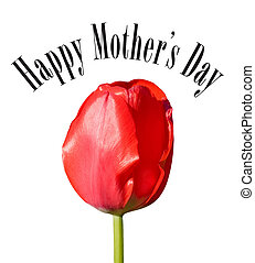 Happy Mothers Day card with red tulip.