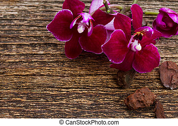 Bunch of violet orchids - Purple orchid flowers close up on...