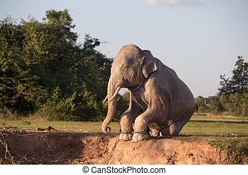 barro, toma, elefante, baño