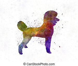 Poodle 01 in watercolor