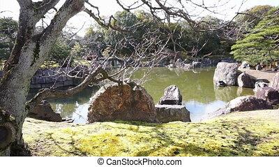 famous zen garden, rock tree pond