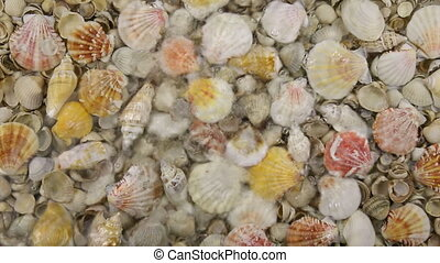 Falling rain drops in the water with sea shells, splash and...