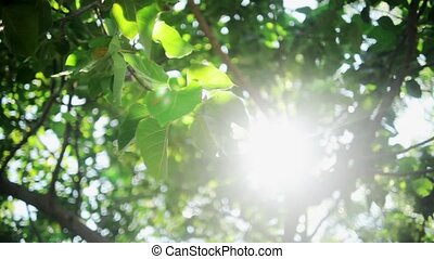 Sun beaming down between the leaves - Sun beaming down...