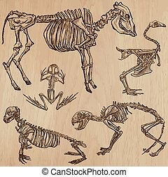 Bones, Skulls, Skeletons - freehands, vector - BONES,...