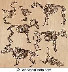 Bones, Skeletons of Domestic Animals- freehand, vector -...