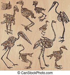 Birds Bones, Skeletons - freehands, vector - BONES,...