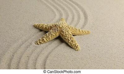 Yellow starfish lying on the undulating sand beach. HD