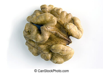 walnut - half of shelled walnut isolated on background