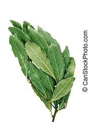 laurel - a bunch of laurel isolated on a white background