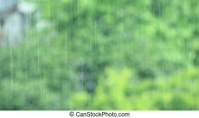 it's raining behind the window in the forest