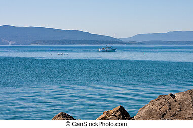 Shrimp Boat in Bellingham Bay - A shrimp boat fishing in the...