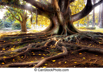 Centenarian Tree - Centenarian tree with large trunk and big...