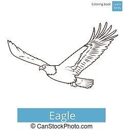 Eagle learn birds coloring book vector - Eagle learn birds...