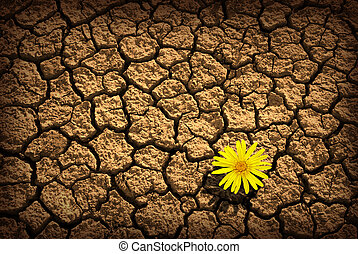 Survivor - Pattern of cracked and dried soil With a sigle...