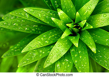 Wet Foliage - Close-up of fresh green foliage with water...