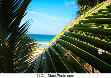 caribbean sea. Beach from the jungle - Tayrona National Park...