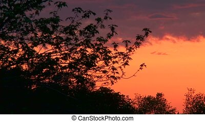 Sunset time lapse whit tree - A orange Sunset time lapse...