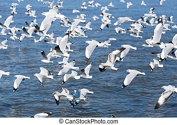 Group of seagulls - Many seagulls on the beach starting to...