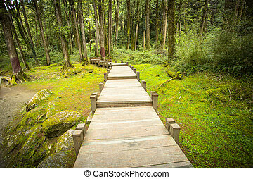 Foot path - Wood Foot path in the nature ,Taiwan.