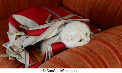 Naughty kitten playing with backpack - Naughty kitten...