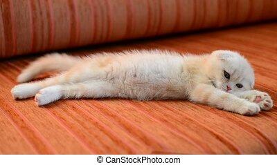Ginger kitten snoozing on couch - Ginger kitten snoozing on...