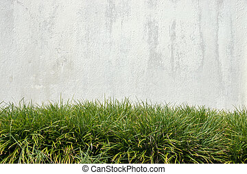 Old white wall And green grass