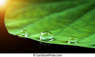 water drop on lotus leaf. - Soft focus of water drop on...
