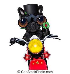 自行車, 好, 狗, 馬達, 運气