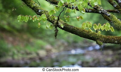 Green Branch And Stream In Nature - Selective focus shot of...