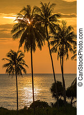 Palm trees silhouette on sunset tropical beach - Coconut...