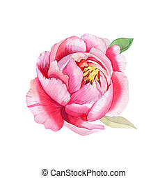 Beautiful Pink flower, Watercolor painting. Boho style
