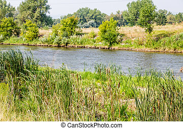 Cattails by River - Cattails and grasses along the Platte...