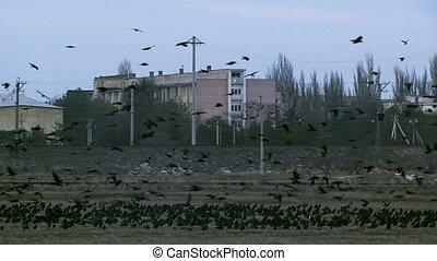Flock - A flock of birds flying near power lines.