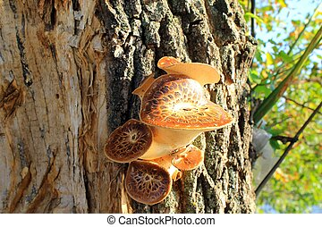 cogumelos, crescendo, árvore