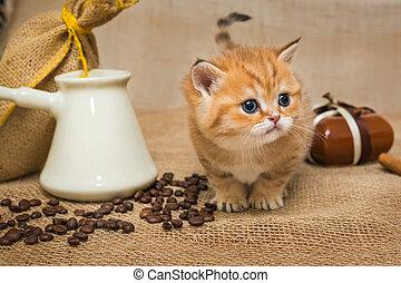 Little kitten and ingredients for coffee - Little kitten...