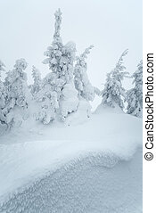 Snow drifts in forest - Christmas winter view Snow drifts in...
