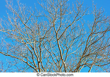 Branches of Bare Tree in the Winter