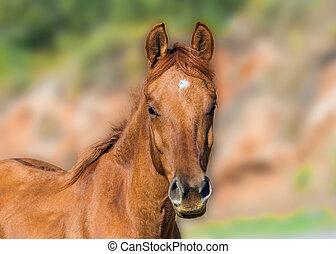 Carefully look beauty foal - Little beautiful foal very...