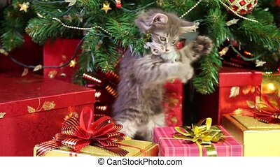 Playful kitten - Little grey kitten playing with Christmas...