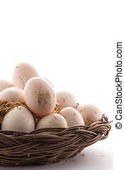 Kaczka, jajko,