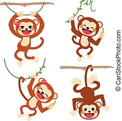 Funny Monkeys Playing - Cute funny set of monkeys plying...