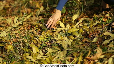 Woman Picking Maple Leaf