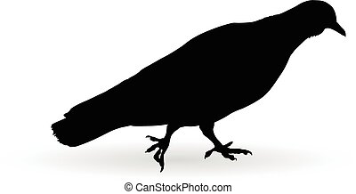 pigeon on the ground vector silhouette illustration